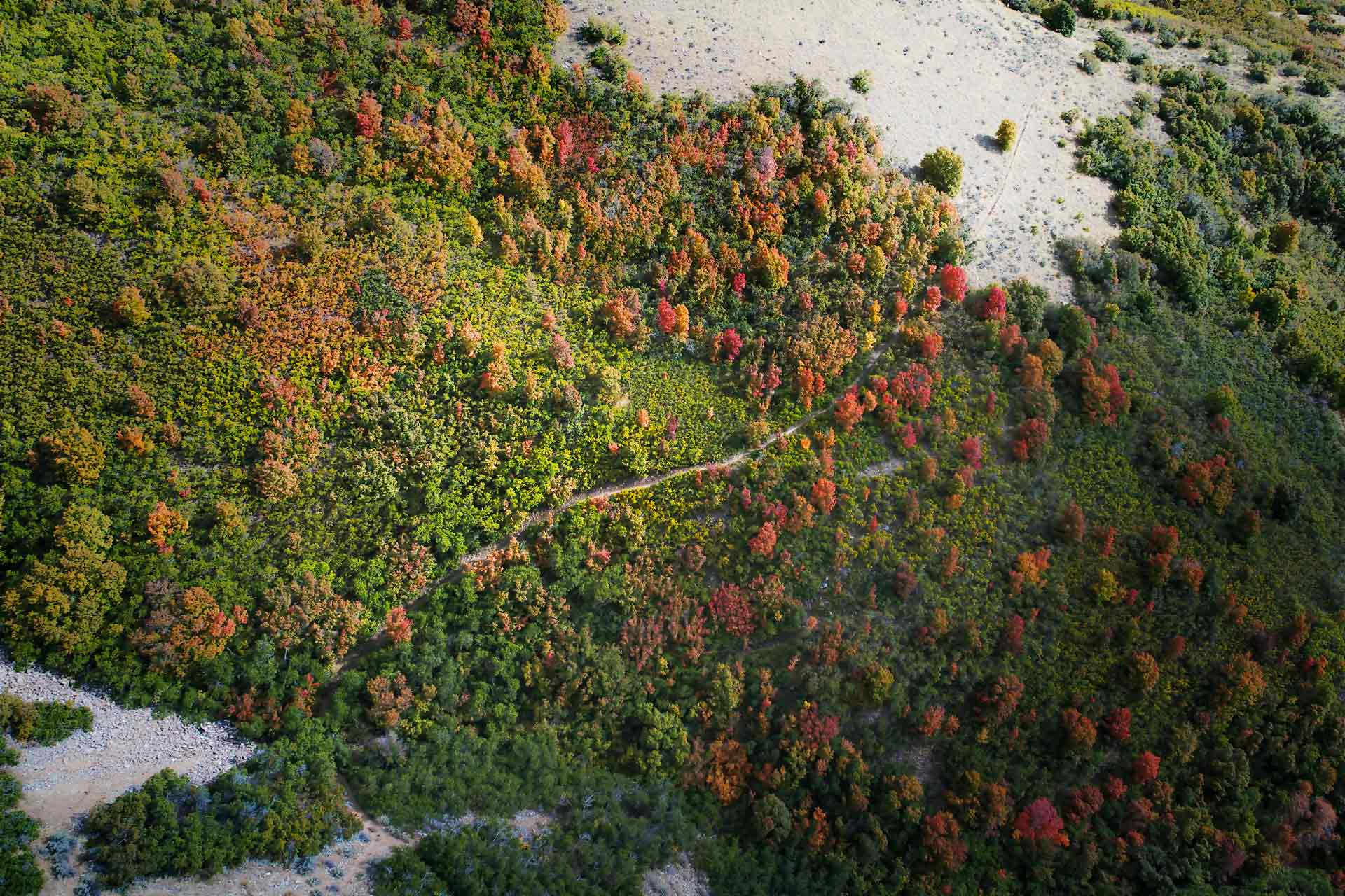 Overhead view looking straight down over fall forest