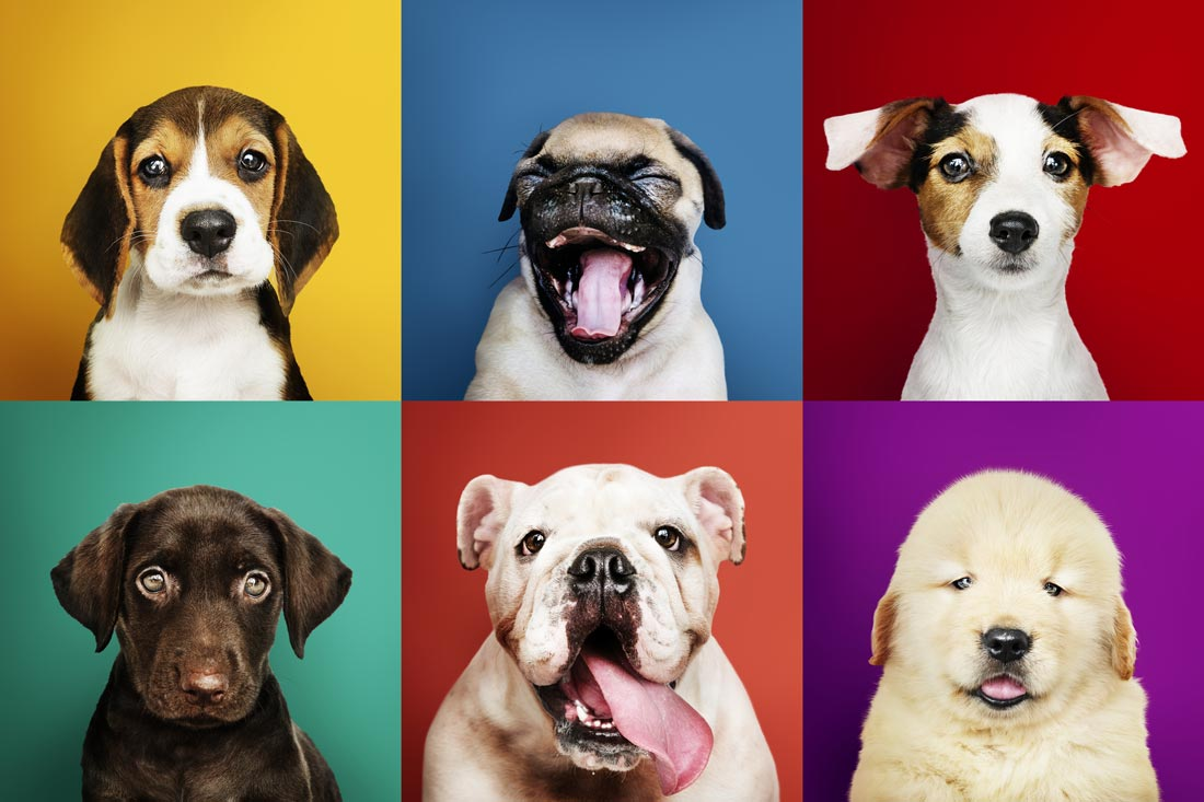 Picture of different dogs